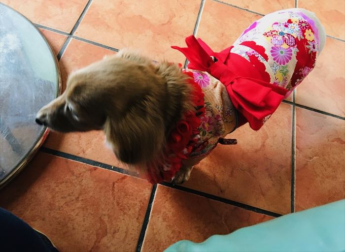 カイホロカフェ 犬