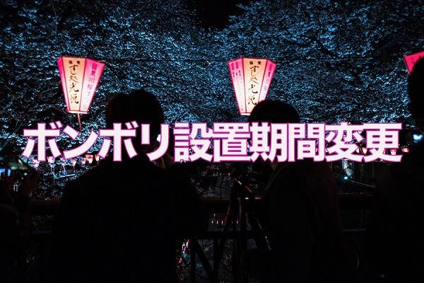 目黒川 桜 ボンボリ