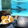 【画像あり】アクアパーク品川の子連れレポ!1歳10ヶ月の息子の楽しみ方♪